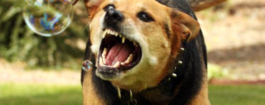 Заболевания нервной системы собак и кошек